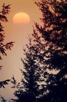 galhos de árvores e pôr do sol na primavera foto