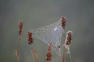 teia de aranha nas plantas secas da natureza