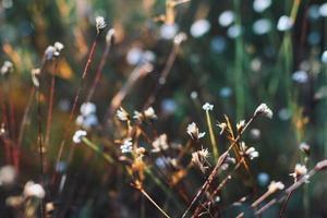 flores silvestres na natureza foto