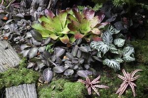 plantas verdes em jardim tropical foto
