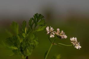 um close-up de um ramo de flor branca em um jardim