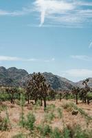 Parque Nacional de Joshua Tree durante o verão