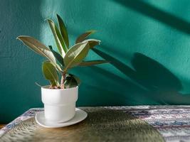 mesa de espaço livre com planta verde
