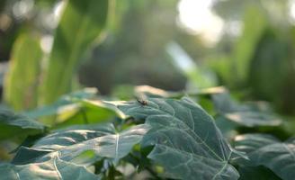 um inseto em folhas naturais