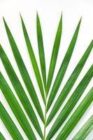 folhas de palmeira isoladas no fundo branco foto