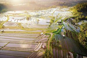 vista aérea de terraços de arroz em bali foto