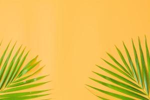 folhas de palmeira isoladas em fundo laranja foto