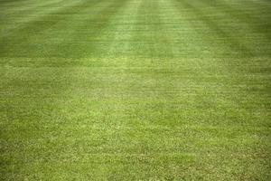 close up do campo de grama foto