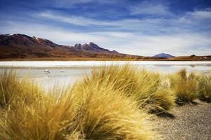 Laguna Hedionda na Bolívia