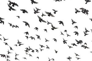 pombos no céu foto