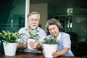 casal de idosos conversando e plantando árvores em vasos foto