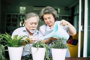casal de idosos conversando e plantando árvores em vasos