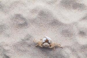 um caranguejo na areia foto