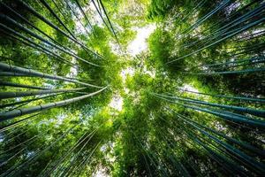 bosque de bambu na floresta em arashiyama em kyoto, japão foto