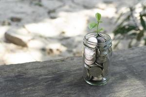 cultivo de moedas de plantas em uma garrafa