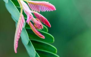 folhas rosa e verdes