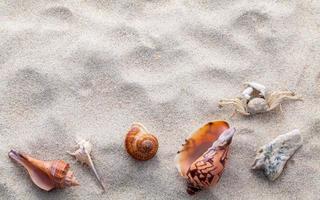 conchas com um caranguejo na areia foto