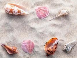 conchas na areia na praia foto
