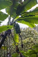 vista na plantação de banana foto