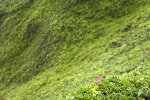 grama verde na colina