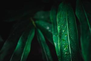 close-up de fundo de folha verde