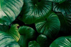 foco seletivo de fundo de folha tropical