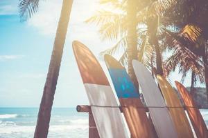 muitas pranchas de surfe ao lado de coqueiros na praia de verão com sol e céu azul foto