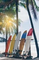 muitas pranchas de surfe ao lado de coqueiros na praia de verão com sol e céu azul