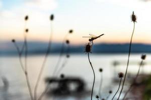libélula em um galho
