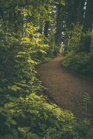 caminho sinuoso através de uma exuberante floresta pacífica do noroeste
