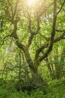árvore coberta de musgo em uma floresta