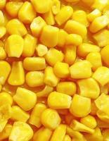 grãos de milho cozidos foto