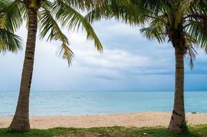 moldura de palmeiras com praia de areia foto