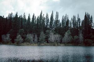 lago e floresta de pinheiros no parque público de liwong, chana, songkhla, Tailândia