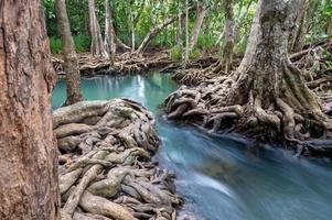 riacho de água e belas raízes de árvores em Krabi, Tailândia