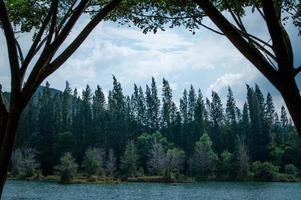 lago e floresta de pinheiros no parque público de Liwong em Songkhla, Tailândia