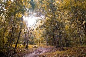 caminho em uma floresta