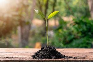 conceito de plantar uma árvore do amor foto