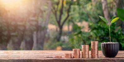 pilha de moedas e uma pequena planta com luz solar
