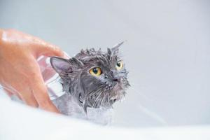 gato zangado na banheira