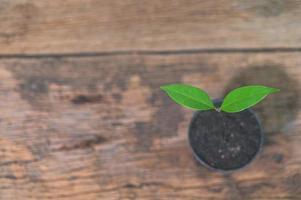 vaso de planta na mesa de madeira foto