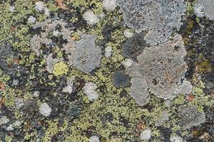 textura de líquenes sobre uma superfície de pedra