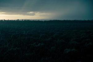 chuva noturna sobre o pomar foto