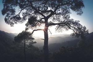 sol brilhando através da árvore nas montanhas troodos em Chipre foto