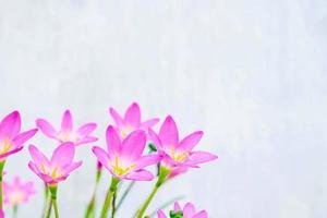 flores rosa e roxas ao lado de uma parede azul