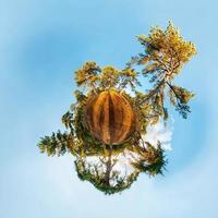 planeta em miniatura com floresta de pinheiros, projeção estereográfica foto