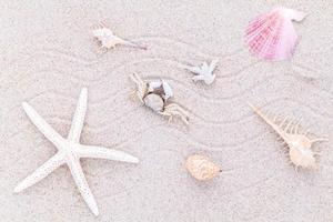 conchas na areia foto
