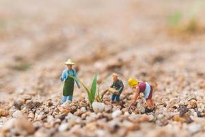 fazendeiros em miniatura trabalhando em um terreno no deserto, conceito de agricultura foto