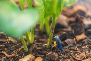 trabalhador em miniatura trabalhando com uma árvore, protegendo o conceito de natureza foto