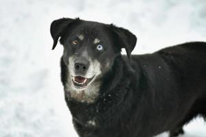 retrato de cachorro preto fofo na neve fresca branca foto